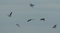 Ooh...the F-18 pissed off those birds!